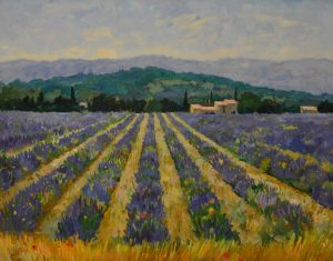 Lavender, Luberon Valley