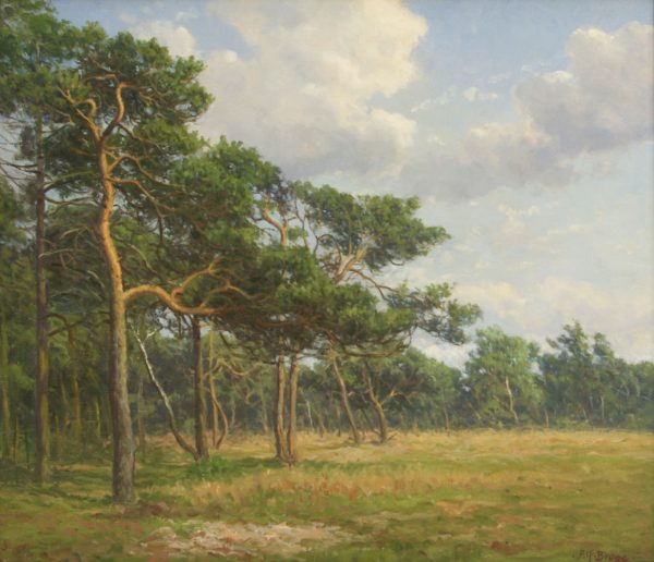 Edge of the Pine Forest
